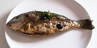 Gilthead Seabream waiting BBQ. Gilthead seabream nicely marinated waiting on a plate ready for barbecue stock photography