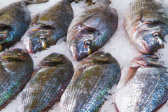 Gilthead (Sparus aurata) on ice in fish market Stock Image
