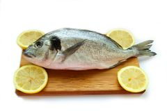 Gilthead on wooden board. Fresh dorado on wooden board isolated over white background Stock Photography