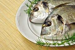 giltheads рыб Стоковое Изображение RF