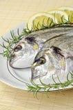 giltheads рыб Стоковые Изображения RF