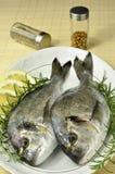 giltheads рыб Стоковое Изображение