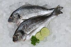 Giltheads свежих рыб на льде Стоковая Фотография