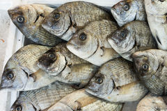Giltheads bream fish at the market Royalty Free Stock Images