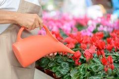 Gim profissional do workin do florista a estufa Imagens de Stock Royalty Free