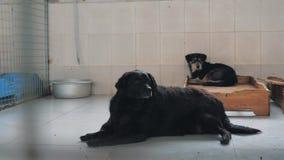Gimbal steadicam schot van droevige honden in schuilplaats achter omheiningswachten dat aan nieuw huis worden moet gered en worde stock videobeelden