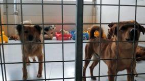 Gimbal steadicam schot van droevige honden in schuilplaats achter omheiningswachten dat aan nieuw huis worden moet gered en worde stock footage