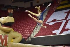 2015 gimnasia de las señoras del NCAA - WVU Imágenes de archivo libres de regalías