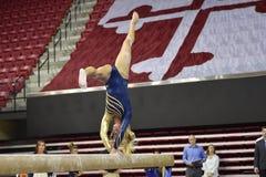 2015 gimnasia de las señoras del NCAA - WVU Imagen de archivo