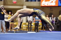 2015 gimnasia del NCAA - estado de WVU-Penn Imagen de archivo