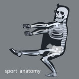Gimnasia esquelética del varón del deporte de la anatomía Fotos de archivo libres de regalías