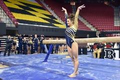 2015 ginástica das senhoras do NCAA - WVU Imagens de Stock