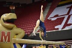 2015 ginástica das senhoras do NCAA - WVU Imagens de Stock Royalty Free