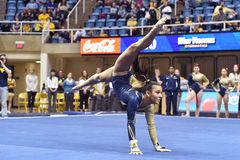 2015 ginástica do NCAA - estado de WVU-Penn Fotografia de Stock Royalty Free