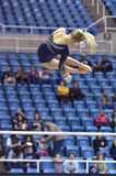 2015 ginástica do NCAA - estado de WVU-Penn Foto de Stock
