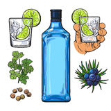 Gin bottle, shot glass with ice and lime, juniper berries. Parsley, cardamom, sketch vector illustration isolated on white background. hand drawn gin bottle Royalty Free Stock Photo