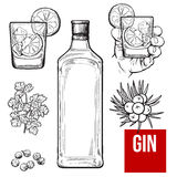 Gin bottle, shot glass with ice and lime, juniper berries. Parsley, cardamom, sketch vector illustration isolated on white background. hand drawn gin bottle vector illustration