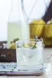 Gin lemonade with thyme Stock Photos