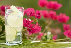 Gin & Tonic With Lime Royalty Free Stock Images