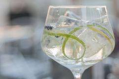 Gin and tonic. With lime ice and other fruits royalty free stock images