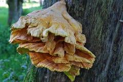 Ginat a coloré le champignon sur un arbre photographie stock libre de droits