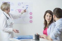 Ginecologista que usa in vitro o esquema Foto de Stock