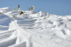 Ginepri innevati all'inverno Fotografie Stock