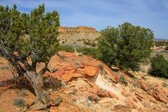 Tesori del New Mexico Fotografie Stock Libere da Diritti