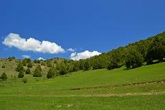 Ginepro nelle montagne Fotografie Stock