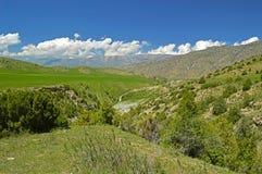 Ginepro nelle montagne, Kirghizistan Fotografia Stock Libera da Diritti