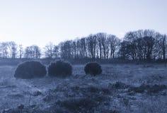 Ginepro in un campo con gli alberi distanti immagini stock