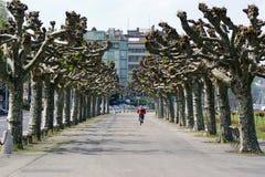 Ginevra, argine del lago Ginevra, maggio 2010 Fotografie Stock Libere da Diritti