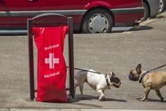Ginevra Svizzera, luppolo Suisse per la coppa del Mondo di calcio Fotografia Stock Libera da Diritti