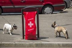 Ginevra Svizzera, luppolo Suisse per la coppa del Mondo di calcio Fotografie Stock