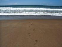 Ging want aan de oceaan zwem Stock Afbeeldingen