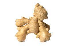 Ginger. Root isolated on white background Royalty Free Stock Image