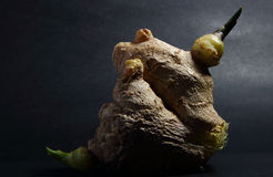 Ginger 6. Fresh ginger tuber on black background Stock Photos
