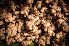 ginger Foto de Stock