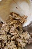 ginger Imagem de Stock