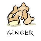 ginger Fotografia de Stock Royalty Free