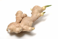 Ginger. It is a whole isolated ginger with burgeon Stock Images