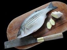 ginger bass nosi Obraz Stock