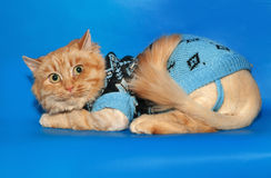 Ginger bobbed cat sweater lying on blue Royalty Free Stock Image
