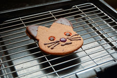 Ginger bread cat biscuit. On wire rack Stock Image
