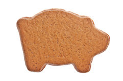 Ginger bread pig Stock Images