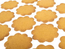 Ginger Breas. Flower shaped gingerbread in rows on white background Royalty Free Stock Image