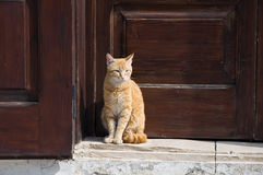 Ginger cat. Stock Images