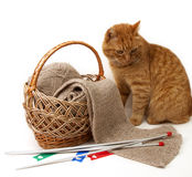 Ginger cat . Royalty Free Stock Image