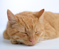 Ginger cat Stock Photo