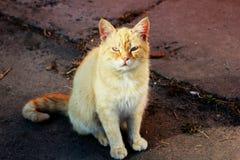 Ginger Cat Image libre de droits